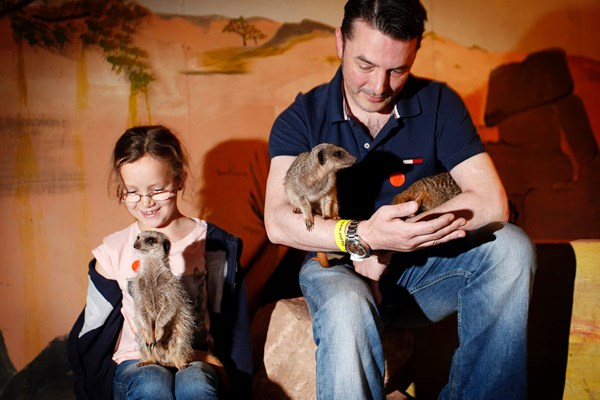 Meerkat Encounter at Hoo Farm Animal Kingdom for Two Adults and Two Children