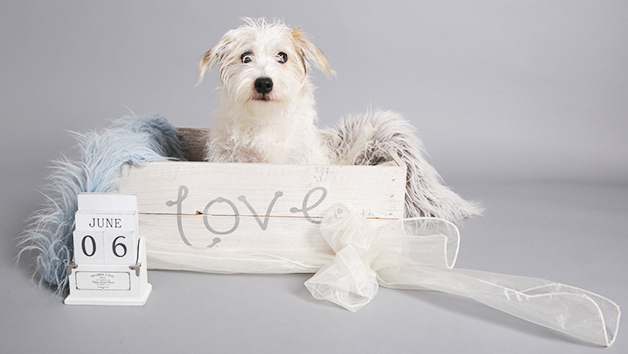 Pet Photoshoot with a Complimentary Print and Keyring - Special Offer