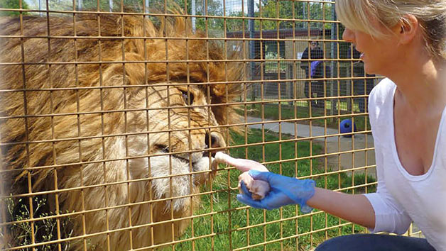 Entry to Linton Zoo with a Big Cat Meet and Feed for One