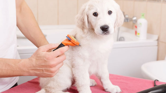Complete Animal Care Online Course for One Person