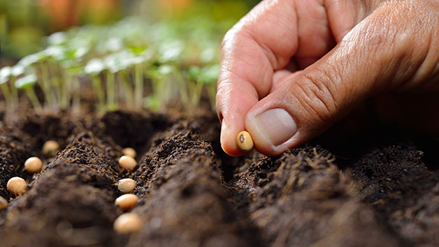 Online Peer Royal Horticultural Society Level 2 Plant Nutrition and Roots Course for One Person