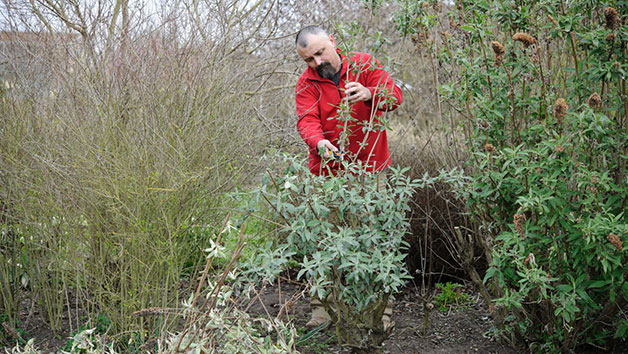 Online Essential Pruning for Gardeners Course for One in a Virtual Classroom