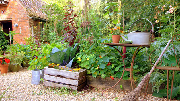 Online Self Sufficient Vegetable Gardening Course for One with an Expert