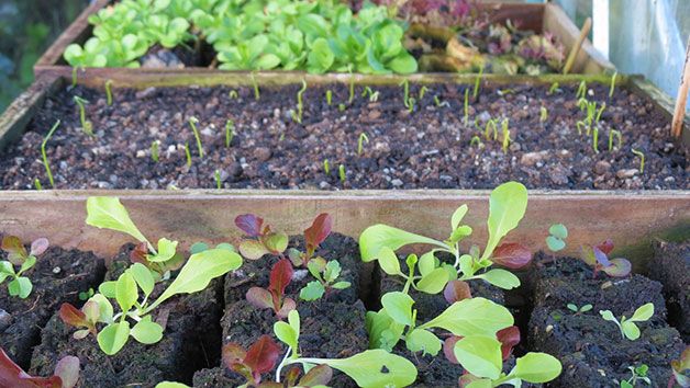 Online Self Sufficient Vegetable Gardening Course for One in a Virtual Classroom