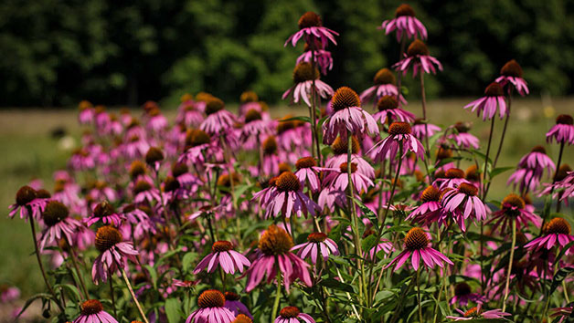 Online Course in Professional Planting Design in a Virtual Classroom