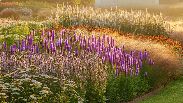 Professional Planting Design Online Course with an Expert for One