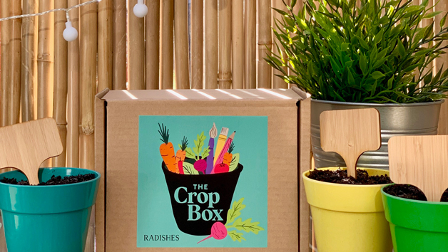 Grow Your Own Vegetables One Off The Crop Box for an Adult or Child