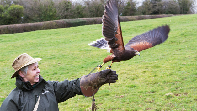 2 for 1 Hawk Walk Experience for Two at Hawksflight Falconry