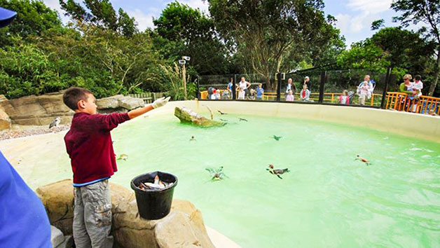 Penguin Encounter at Drusillas Zoo Park for One