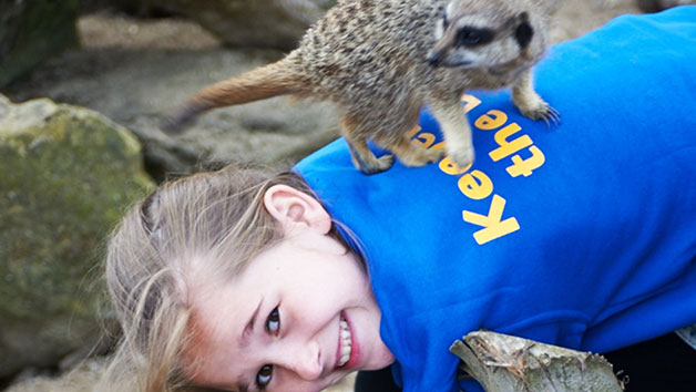 Zookeeper Experience Day at Drusillas Zoo Park for One