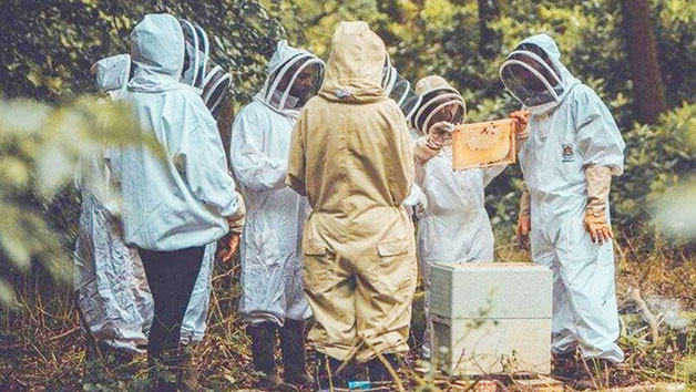 Three-Hour Beekeeping Experience for One at The London Bee Company