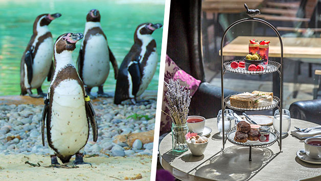 Afternoon Tea with Prosecco at Gordon Ramsay's York and Albany and London Zoo for Two