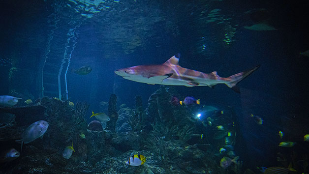 Diving with Sharks Experience at Skegness Aquarium for Two