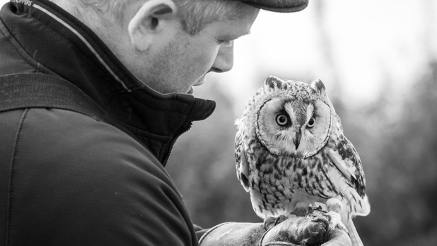 Introduction to Birds of Prey with BB Falconry