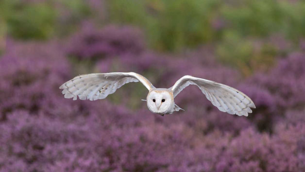 Owl Encounter for One at Lee Valley Park Farms