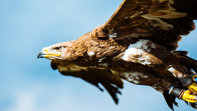 Bird of Prey Photographic Day at Lee Valley Park Farms for One