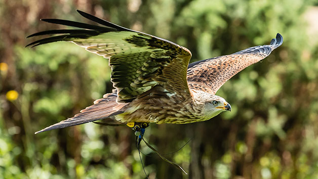 Photo Half Day for One at Millets Falconry