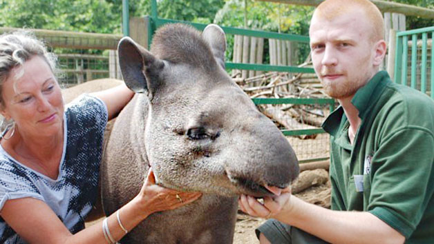 Tickle a Tapir Experience at Paradise Wildlife Park for Two