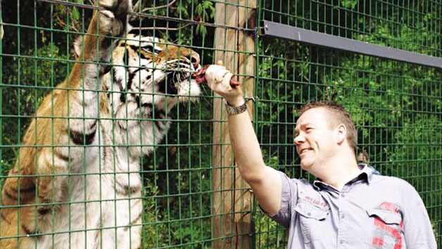Feed the Big Cats by Hand at Paradise Wildlife Park (Weekdays)