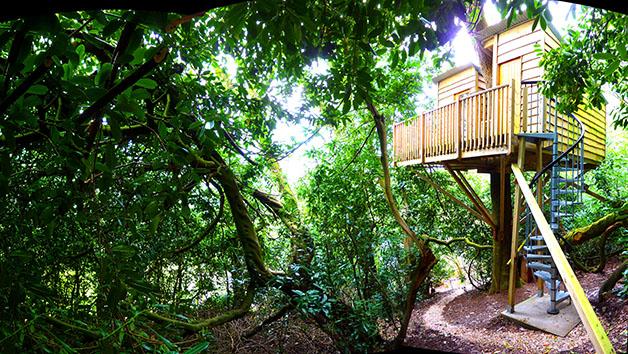 Two Night Break in The Nest Tree House