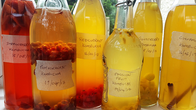 Online Food or Drink Fermentation Course with The Fermentarium
