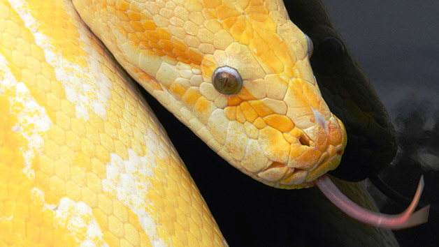 Meet the Reptiles Encounter at The Animal Experience for Two Adults and Two Children