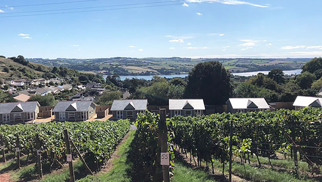 Tour and Tasting in Devon with Lunch for Two at Old Walls Vineyard