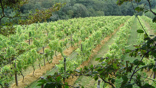 Organic Deluxe Vineyard Tour and Tasting for Two at Sedlescombe in East Sussex