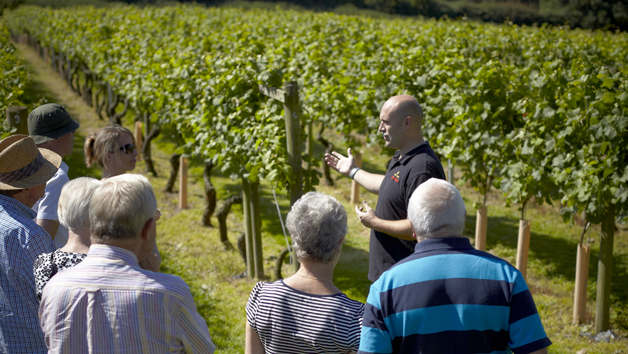 Vineyard Tour and Wine Tasting for Two at Chapel Down Winery, Kent