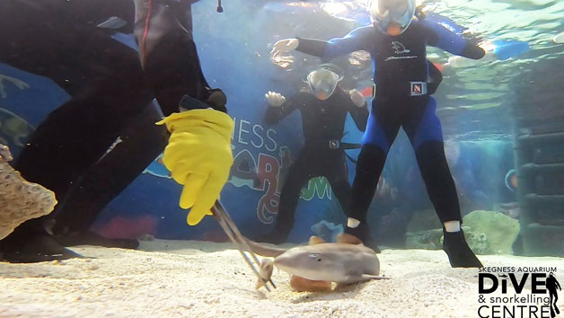 Family Snorkelling and Entry at Skegness Aquarium