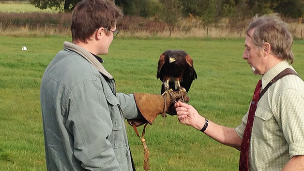 Birds of Prey Three Hour Experience for One – Special Offer