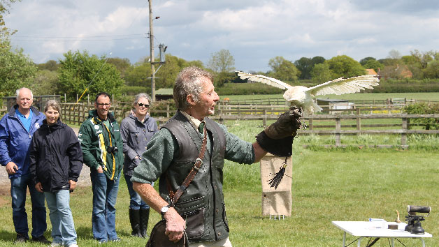 A Bird of Prey Falconry Experience for Two