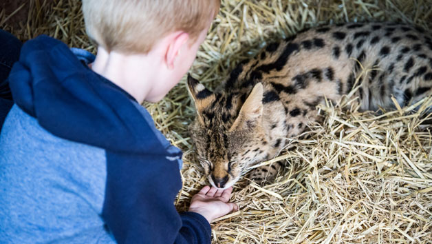 One Hour Choice of Animal Experience for Two at Hoo Farm Animal Kingdom
