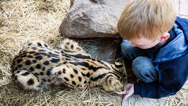 One Hour Choice of Animal Experience for a Family at Hoo Farm Animal Kingdom