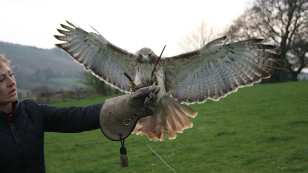 Birds of Prey Three Hour Experience for Two at Rhuallan Raptors