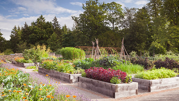 Kitchen Garden Tour and Lunch for Two at Rudding Park, Yorkshire
