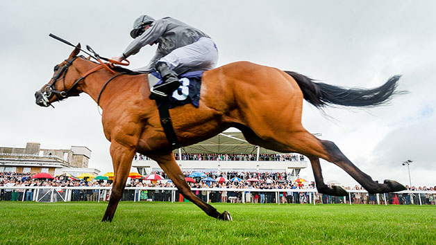 Horse Racing Day at Bath Racecourse for Two