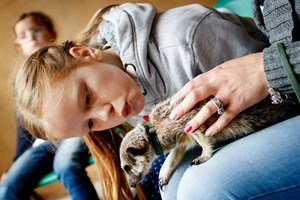 2 For 1 Meerkat Experience At Hoo Farm Animal Kingdom For Two