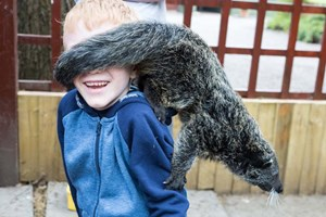 2 For 1 Binturong Experience At Hoo Farm Animal Kingdom For Two