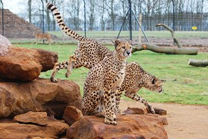 Entry To Zsl Whipsnade Zoo For One Adult And One Child