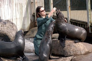 Keeper For A Day At Bristol Zoo And Entry For Two With Lunch And A Souvenir