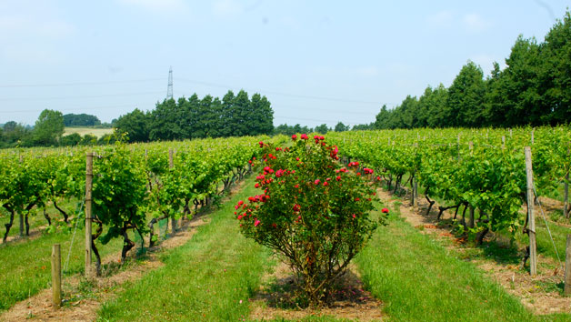 Vineyard Tour And Wine Tasting For Two At Chilford Hall