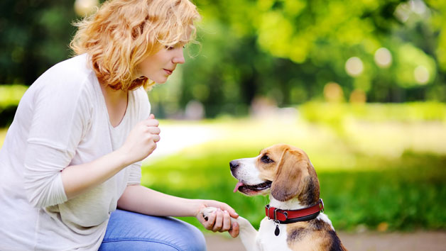 Pet Sitting And Dog Walking Diploma Online Course For One Person