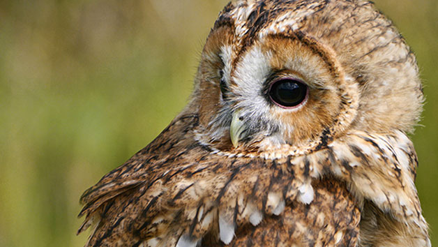 Meet And Greet Online With The Birds At Hilltop Birds Of Prey