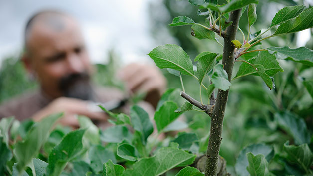 Online Essential Pruning For Gardeners Course With An Expert For One