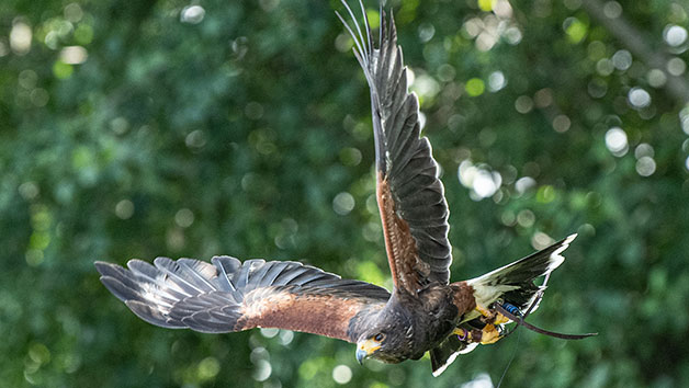 Discover Falconry For One At Millets Farm Falconry Centre, Oxfordshire