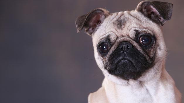 Pet Portrait Photoshoot