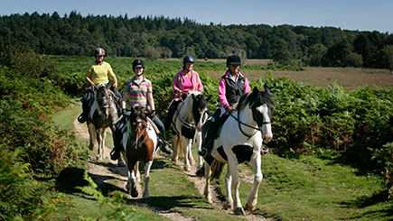 90 Minute Western Trail Ride in the New Forest National Park