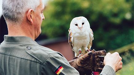 Woodland Walk and Owl Flying Experience at Coda Falconry