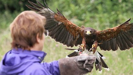 One to One Falconry Experience at Lee Valley Park Farms